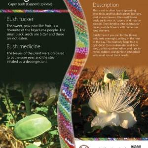 Aboriginal graphic design for bush tucker trail