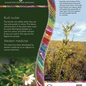 Ngurin bush tucker interpretive signage
