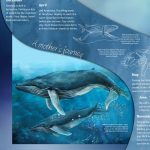 Whale Watching Signage
