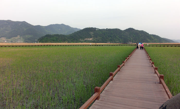 Suncheon Bay Wetland