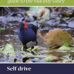 Macleay Bird Watching Guide