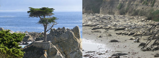 Monterey and Ano Nuevo