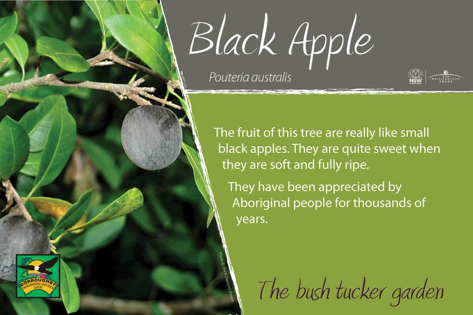 Dorroughby bush tucker black apple