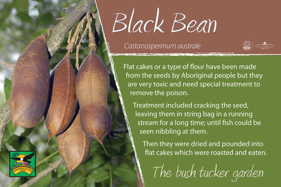 Dorroughby bush tucker black bean