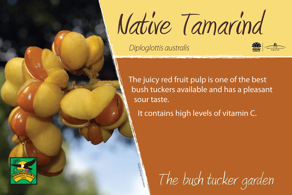 Dorroughby bush tucker native tamarind