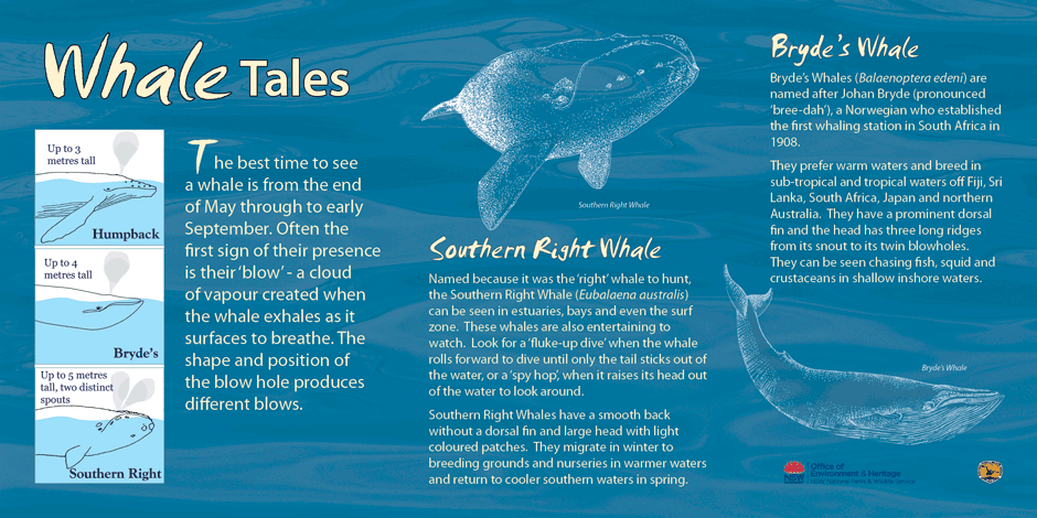 Whale Watching Sign - Saltwater NP