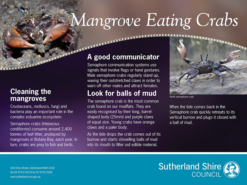 Mangrove eating crabs environmental sign