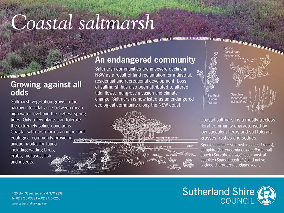 Saltmarsh environmental signs
