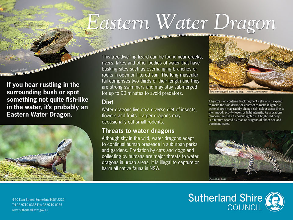 Eastern Water Dragon environmental interpretive signage