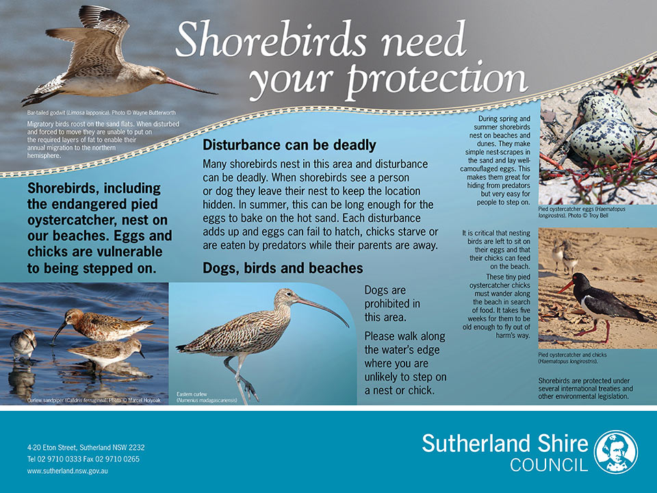 Protecting Shorebirds environmental sign