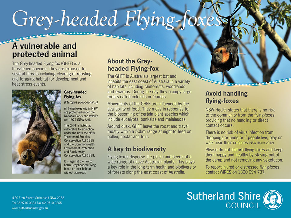 Grey-headed Flying Fox signage