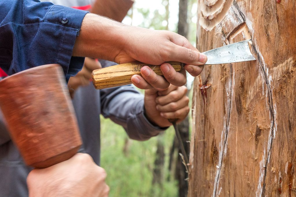 Carving trees for the sculpture trail