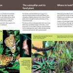 Fritillary Butterfly brochure