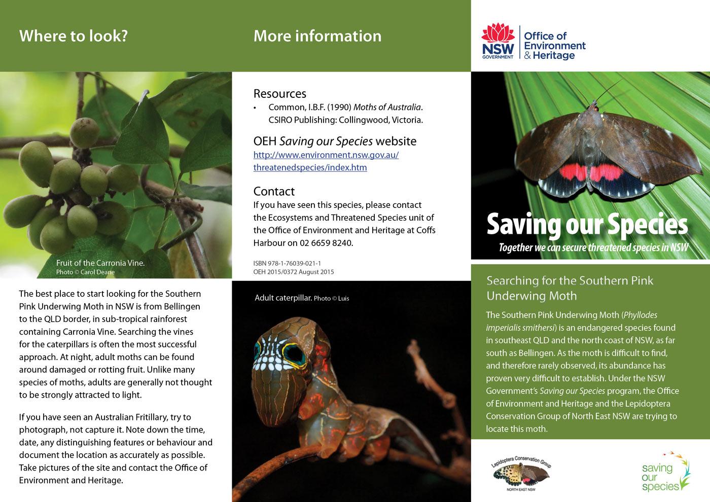 Pink Underwing Moth brochure