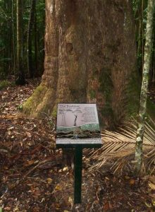Yarriabini Interpretive Signage