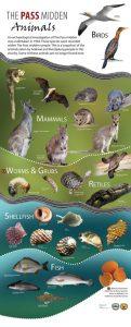 The Pass Midden animals