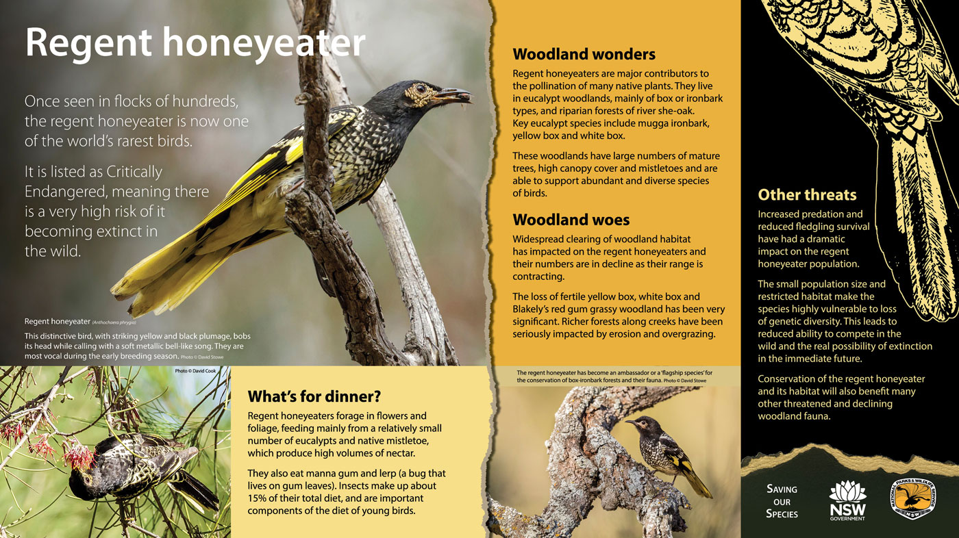 Regent Honeyeater Saving our Species Sign