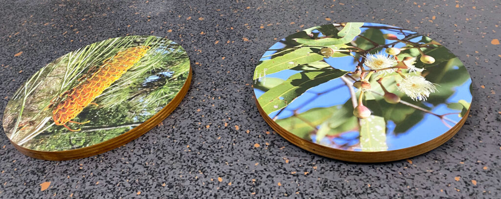 Alice Mitchell Gallery wall discs